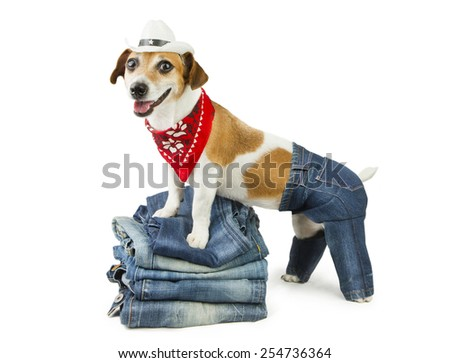 Fashionable happy dog demonstrates coolest designer jeans. Cowboy hat and red bandana - stock photo
