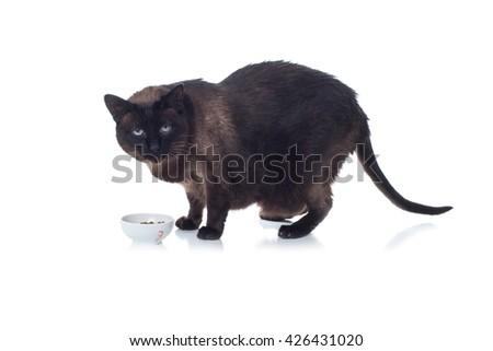 Fat cat - stock photo