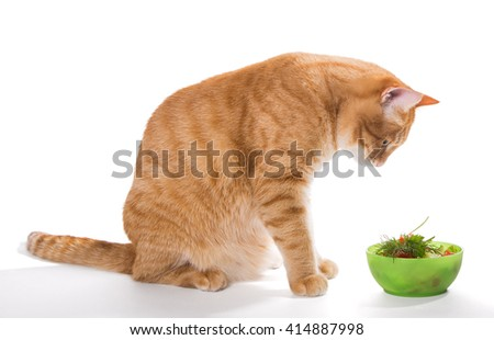Fat ginger cat eating a salad, isolated on white