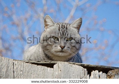 Fat grey cat against blue sky - stock photo