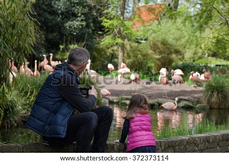 Father and daughter watching flamingos in a zoo