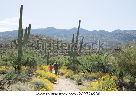 Father and son walking along the blooming Sonoran Desert in Saguaro National Park, Arizona, USA - stock photo