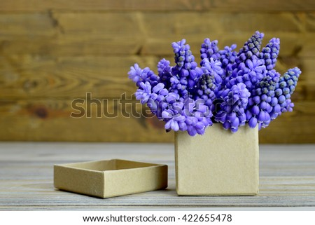 Father's Day gift: Muscari flowers arranged in gift box - stock photo
