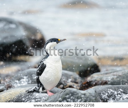 Fauna of Antarctica - stock photo