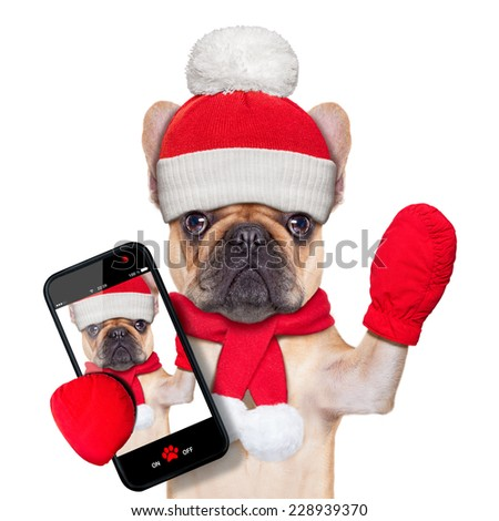 fawn bulldog dog  as santa claus on christmas , taking a selfie and waving with hand, isolated on white background - stock photo