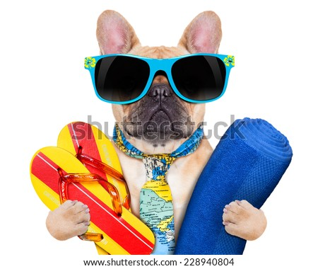 fawn bulldog with flip flops and towel , wearing a tie and sunglasses, isolated on white background - stock photo