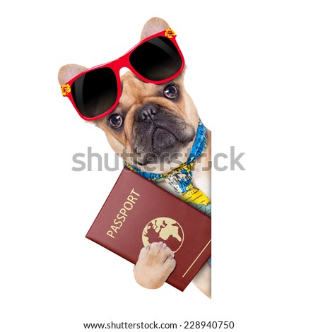 fawn bulldog with passport immigrating or ready for a vacation , besides a white placard or banner, isolated on white background - stock photo
