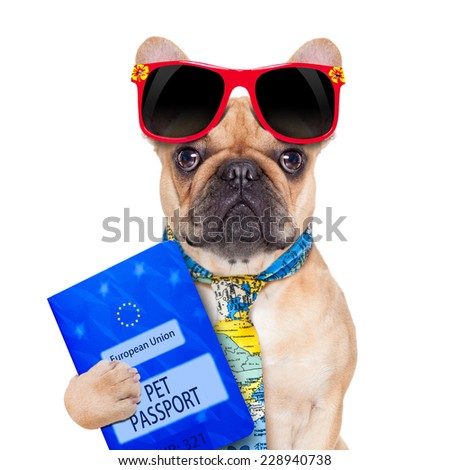 fawn bulldog with passport immigrating or ready for a vacation , isolated on white background - stock photo