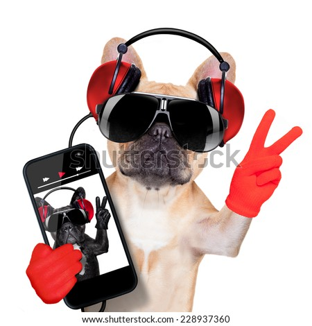 fawn french bulldog listening to a music player , with peace or victory fingers, isolated on white background - stock photo