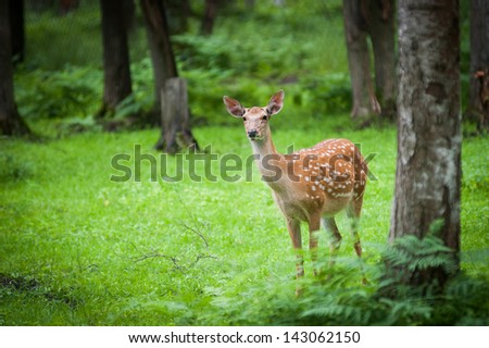 fawn in the woods - stock photo