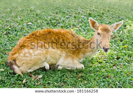 Fawn is lying on green grass - stock photo