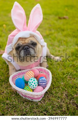 Fawn pug dog wearing rabbit costume with colorful easter eggs on grass.