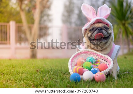 Fawn pug dog wearing rabbit costume with colorful easter eggs on grass. - stock photo