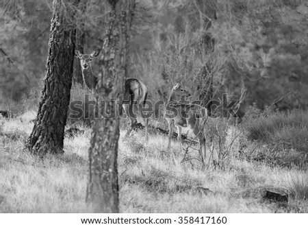 Fawns in a forest - stock photo
