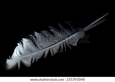 feather against black