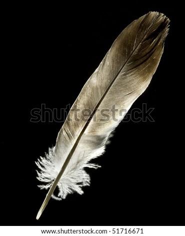 feather bird on black  background - stock photo