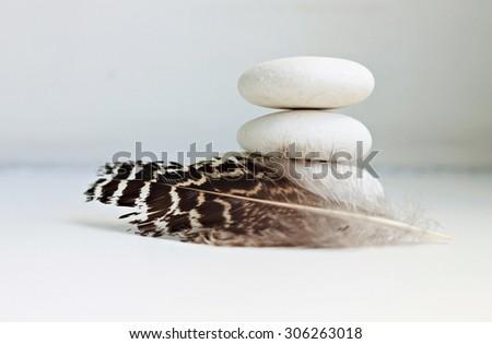 feather bird white stone pebbles white empty background soft tranquil focus - stock photo