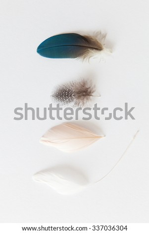 Feather Collection Detail closeups - stock photo