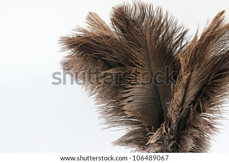 Feather duster close-up on a white background A feather duster comprising ostrich feathers isolated on a white background. Copy space on the left of the image.