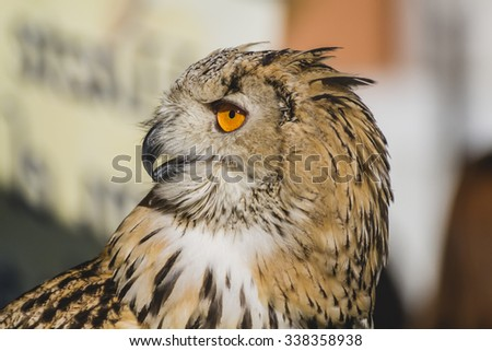 feather, eagle owl, detail of head, lovely plumage - stock photo