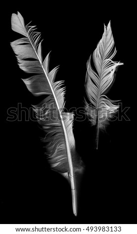 Feather isolated on the black background