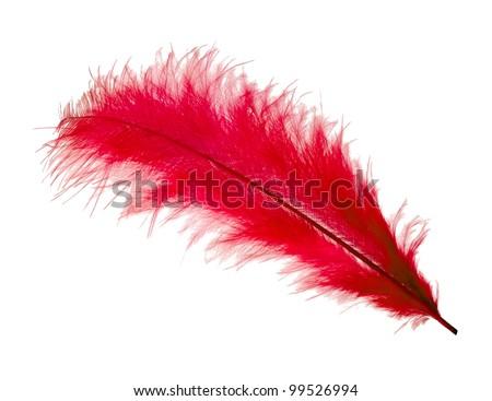 Feather isolated on white background - stock photo