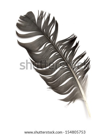 feather of a bird