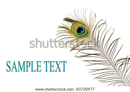 feather of peacock on a white background