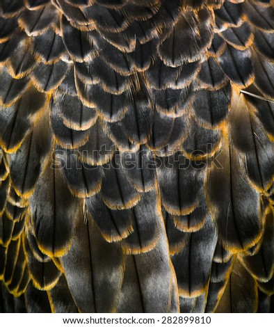 feather of some bird - eagle hawk real genuine - stock photo