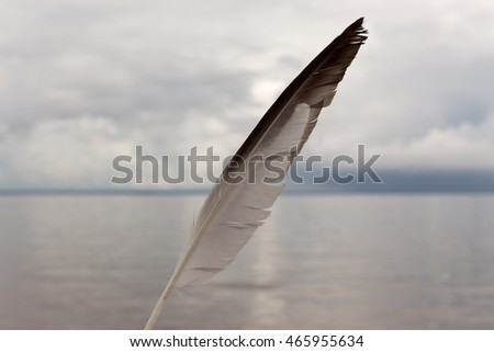 feather on a background of sky and sea
