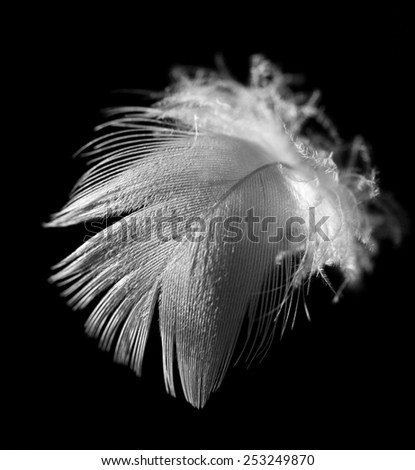 feather on a black background - stock photo