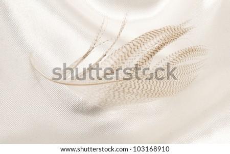 feather on light fabric - stock photo