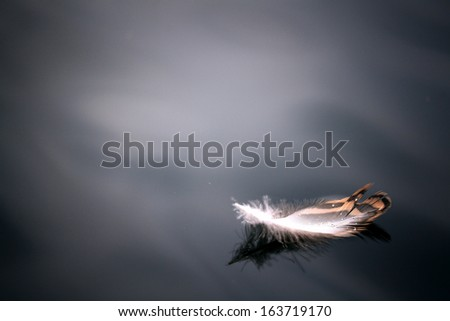Feather on the water - stock photo