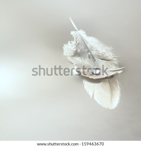 feather on water - stock photo