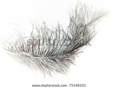 feather on white - stock photo