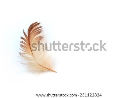 feather on white background - stock photo