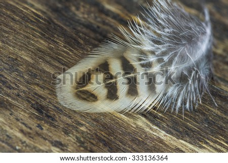 Feather on wooden background - Closeup with selective focus - stock photo