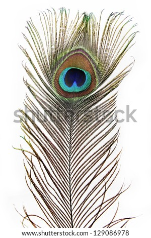 Feather Peacock - stock photo