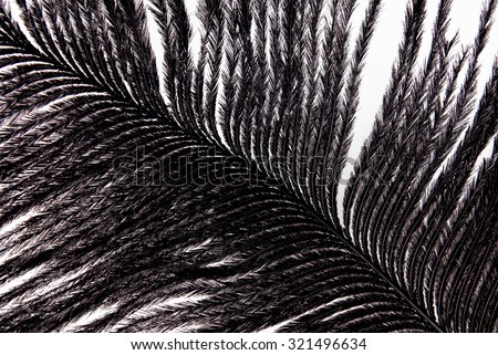 feather plumage black texture - stock photo
