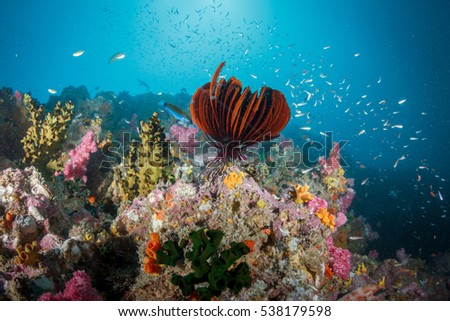 Feather stars and coral reef stone in Andaman sea Thailand