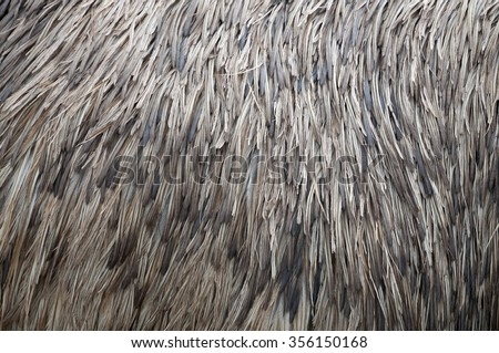 Feather Texture, ostrich - stock photo