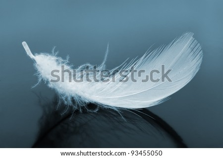 Feather. The bird's feather blue tone images