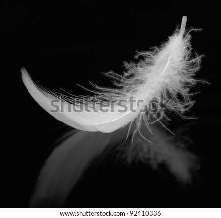 Feather. The bird's feather lies on a black background with reflexion - stock photo