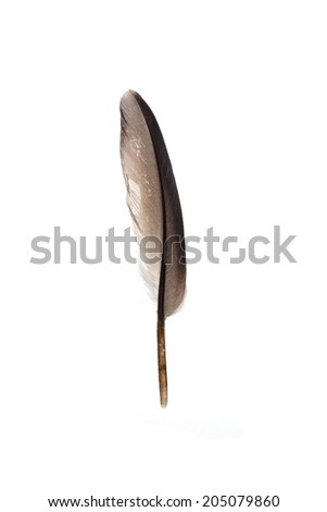 feather with reflection