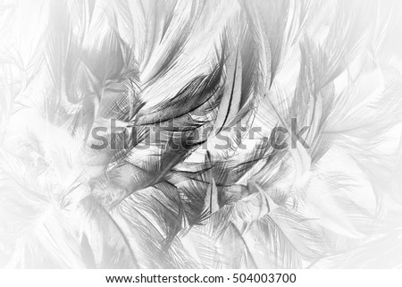 feather wool dark black with light abstract background