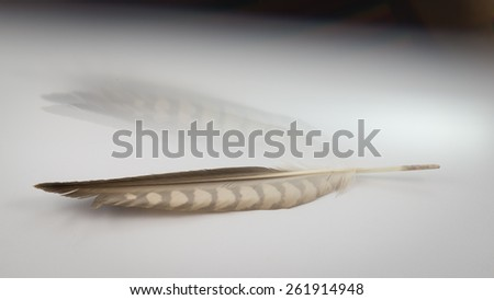 Feathers -creative background and reflections