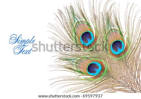 Feathers of a peacock. Isolated over white - stock photo