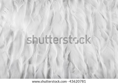 Feathers of a White Bird Wing - stock photo