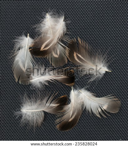 feathers on a black background - stock photo