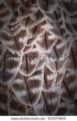feathers on the back falcon - stock photo